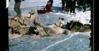 Dogsled race in Uummannaq