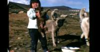 Sled dogs in North Greenland